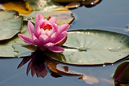 Mindfulness Training & MBSR Programs